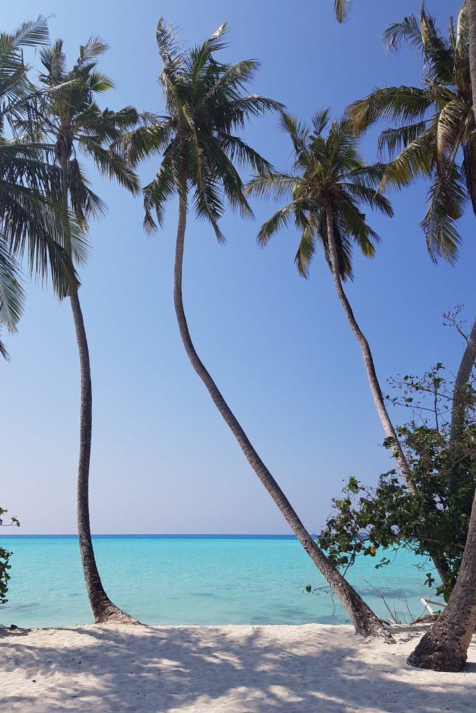 Fulidhoo Maldiverne Backpacking Maldives Rejse Ferie Strand Vand